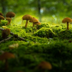 How Fungi Helped Create Life as We Know it