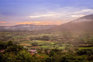Bridging the gap between forestry and agriculture to improve food security
