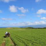 Healthy Soils, Healthy Ranching in Hawai'i