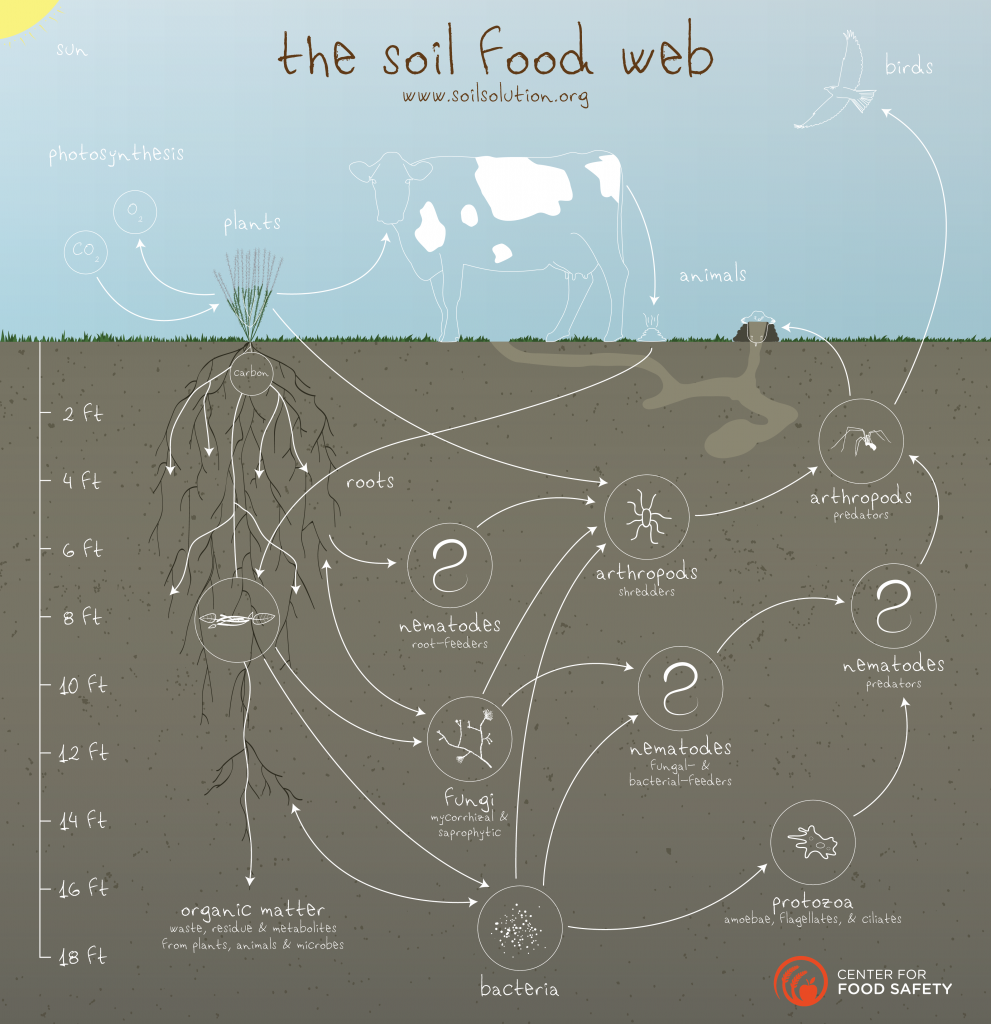soil-food-web_v4_web-01