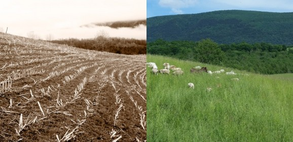 6 States Tapping into the Benefits of Carbon Farming