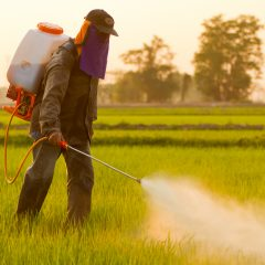 Toxic Chemicals in our Soil: Time to Pull The Plug on Methyl Bromide
