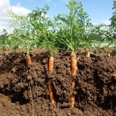 Soil Solutions Underscores the Importance of Healthy Soil for Climate Stability